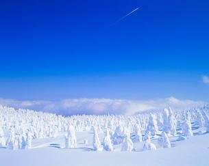 樹氷の樹林の写真素材 [FYI01512033]
