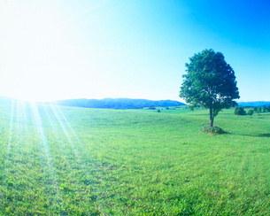 牧草地と木立と太陽の光芒の写真素材 [FYI01512034]