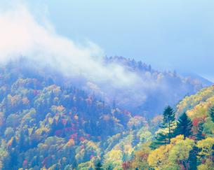 紅葉の樹林の写真素材 [FYI01512100]