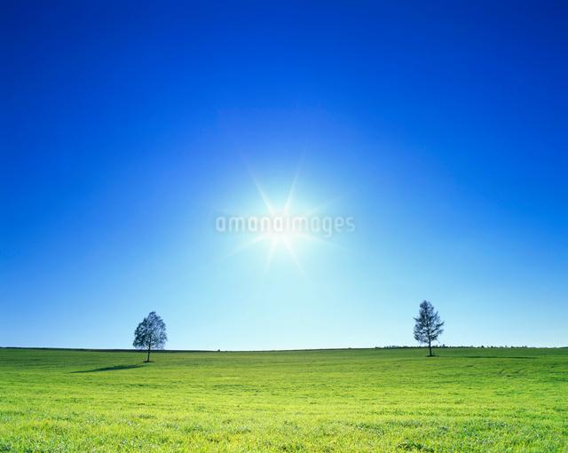 牧草地と木立と太陽の光芒の写真素材 [FYI01512120]