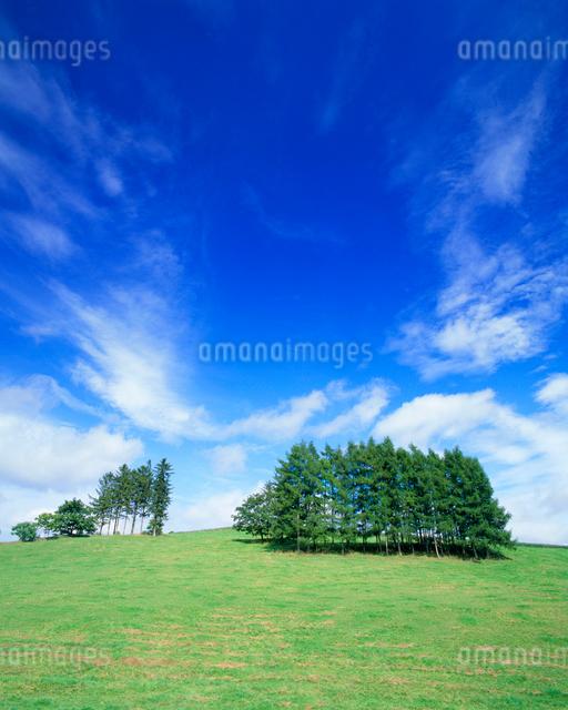 牧草地と木立の写真素材 [FYI01512245]