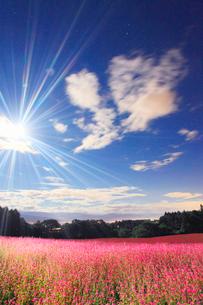 月夜の花咲く赤そば畑のライトアップと流れる雲の写真素材 [FYI01512255]