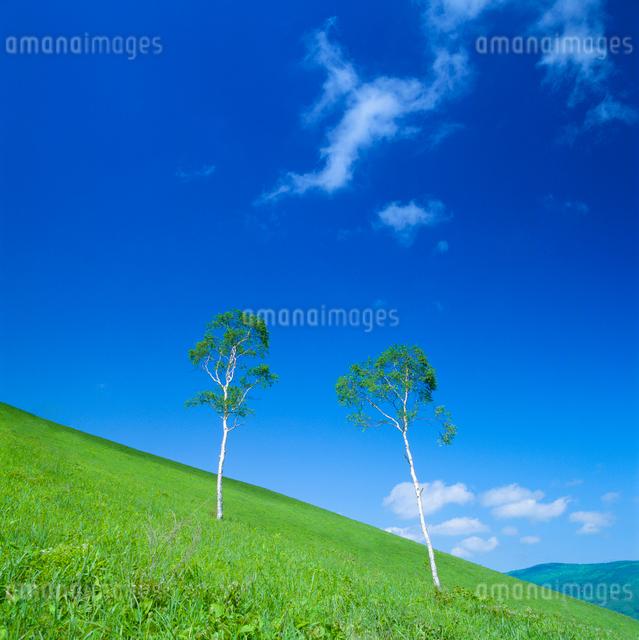 牧草地と木立の写真素材 [FYI01512265]