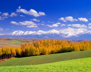 小麦畑などの畑と紅葉のカラマツ林と十勝連峰の写真素材 [FYI01512281]