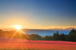 花咲く赤そば畑と朝日の光芒と仙丈ヶ岳など南アルプスの写真素材 [FYI01512287]