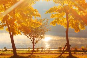 黄金アカシアの紅葉と朝霧の聖湖の写真素材 [FYI01512395]