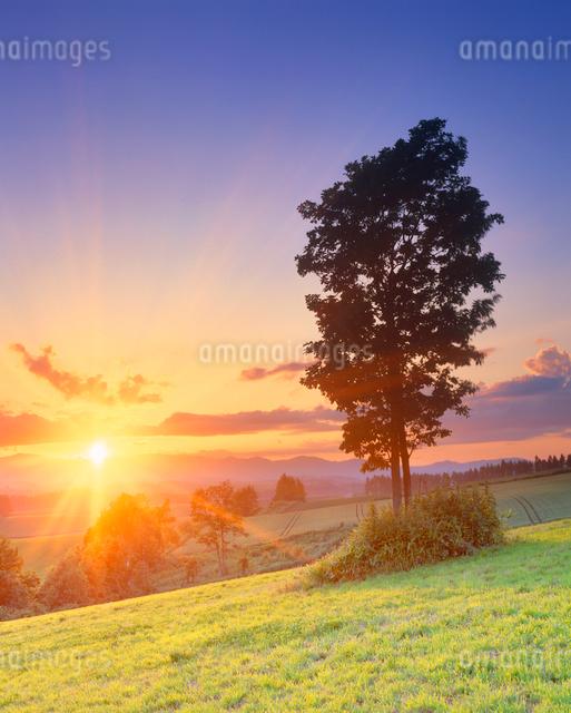 牧草地と木立と夕日の光芒の写真素材 [FYI01512402]