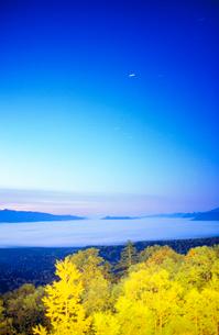 黎明の紅葉の樹林のライトアップと糠平方向の雲海の写真素材 [FYI01512420]