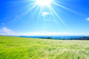 風渡るビール麦畑と太陽の光芒の写真素材 [FYI01512529]
