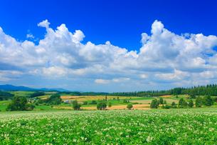 三愛の丘展望公園から望むジャガイモ畑などの丘の写真素材 [FYI01512707]