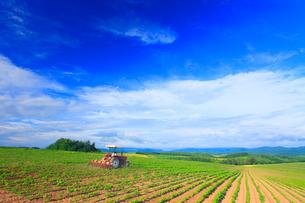 小豆畑とトラクターの写真素材 [FYI01512722]