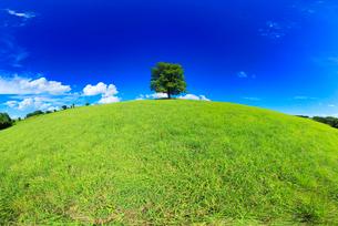 牧草地とはるにれの木立の丘,魚眼レンズの写真素材 [FYI01512726]