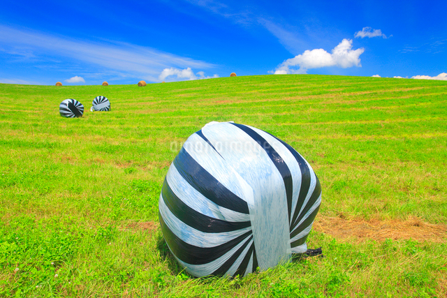 干し草ロールと牧草地の写真素材 [FYI01512807]