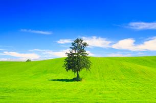 牧草地と春よ来いの木の写真素材 [FYI01512838]