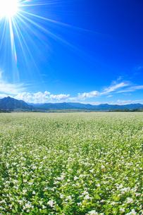 花咲く蕎麦畑と独鈷山などの山並みの写真素材 [FYI01512963]