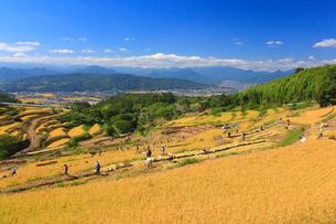 信州稲倉の棚田と稲刈り作業の写真素材 [FYI01513066]