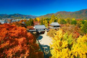 上田城と紅葉のイチョウとケヤキの写真素材 [FYI01513221]