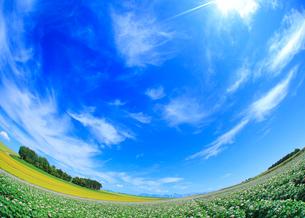 小麦畑と木立とジャガイモ畑,魚眼レンズの写真素材 [FYI01513301]