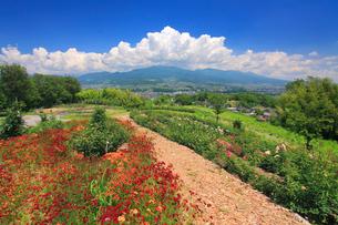 バラなどの花咲く小道と烏帽子岳と浅間山の写真素材 [FYI01513324]