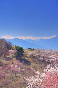弘法山古墳の桜と乗鞍岳の写真素材 [FYI01513339]