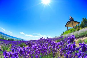 ラベンダー畑と展望台と太陽の光芒,魚眼レンズの写真素材 [FYI01513383]
