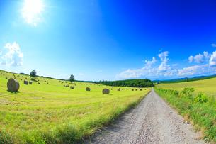 道路と干し草ロールと木立と牧草地と太陽の光芒の写真素材 [FYI01513644]