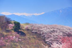 弘法山古墳の桜と乗鞍岳の写真素材 [FYI01513822]