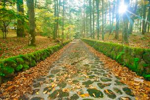 ジョンレノンが散歩を楽しんだ石畳道と朝の木もれ日の写真素材 [FYI01513902]