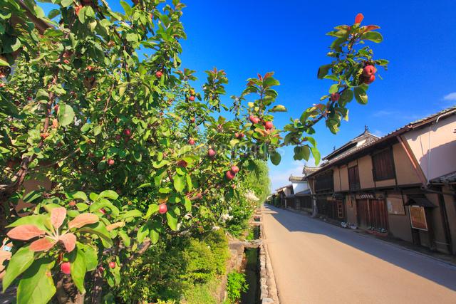コリンゴ実る海野宿の街並の写真素材 [FYI01513903]