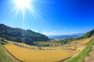 信州稲倉の棚田と稲刈り作業,魚眼レンズの写真素材 [FYI01513976]