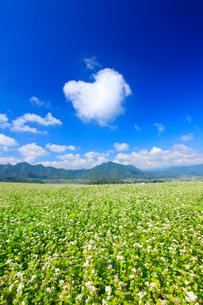 花咲く蕎麦畑と独鈷山などの山並みとハートの雲の写真素材 [FYI01513977]