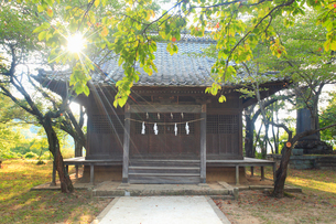 松代妻女山招魂社と木もれ日の写真素材 [FYI01513979]