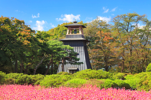 城鐘とセンニチコウの花畑の写真素材 [FYI01514218]