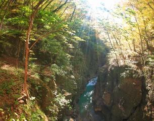 鹿飛橋から望む吾妻渓谷上流方向と木もれ日の光芒の写真素材 [FYI01514277]