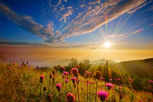 ノアザミと浅間山などの山並みと朝日の光芒の写真素材 [FYI01514339]