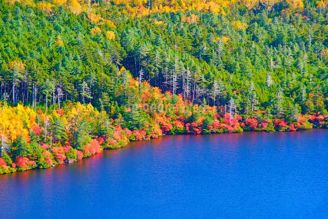 高見石から望む紅葉の白駒池のアップの写真素材 [FYI01514352]