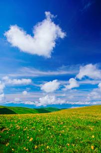 ニッコウキスゲとハート型の雲の写真素材 [FYI01514494]