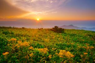アキノキリンソウと穂高連峰方向の山並みと夕日の写真素材 [FYI01514522]