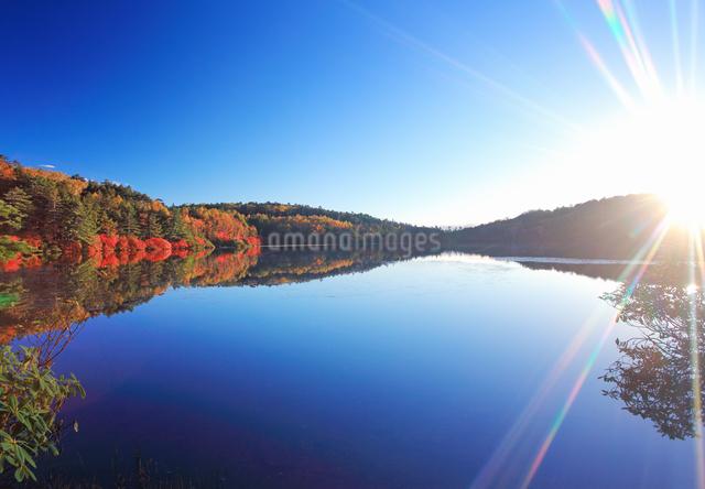 紅葉の水鏡の白駒池と朝日の写真素材 [FYI01514587]