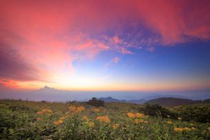 アキノキリンソウと北西方向の山並みと夕焼けの写真素材 [FYI01514656]