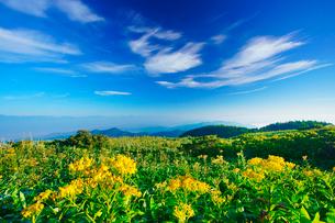 アキノキリンソウと白馬岳など北アルプスの山並みの写真素材 [FYI01514677]