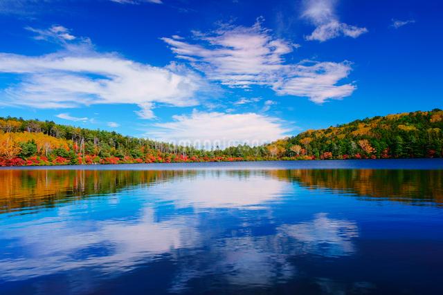 紅葉の水鏡の白駒池と秋空の写真素材 [FYI01514728]