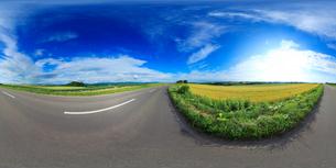 パッチワークの路とセブンスターの木遠望のVRパノラマの写真素材 [FYI01514751]