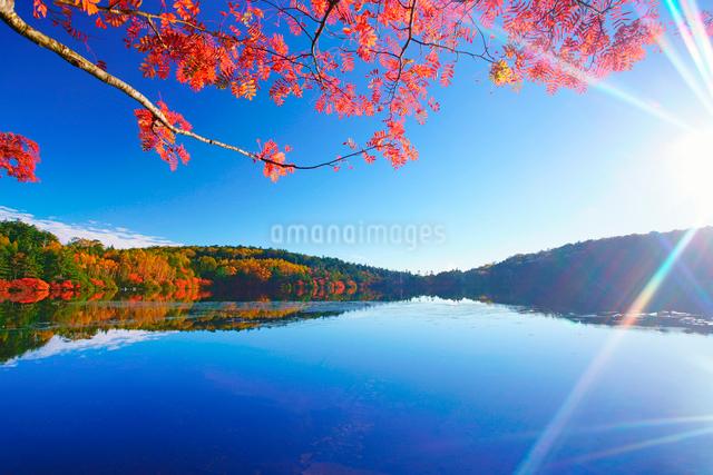 紅葉の水鏡の白駒池とナナカマドと太陽の光芒の写真素材 [FYI01514829]