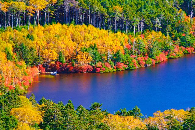 高見石から望む紅葉の白駒池のアップの写真素材 [FYI01514962]