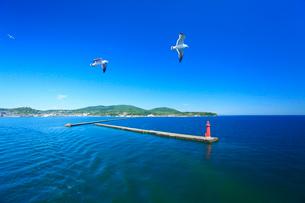 カモメと小樽港の赤灯台の写真素材 [FYI01515052]