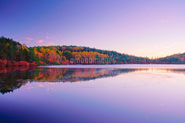 黎明の紅葉の水鏡の白駒池の写真素材 [FYI01515073]