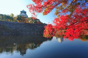 大阪城と紅葉の桜と内濠の写真素材 [FYI01515184]