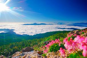 コマクサと甲斐駒ケ岳などの山並みと雲海と太陽の光芒の写真素材 [FYI01515309]