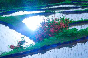 ツツジと田毎の月のおばすて棚田と朝の太陽の反射の写真素材 [FYI01515344]
